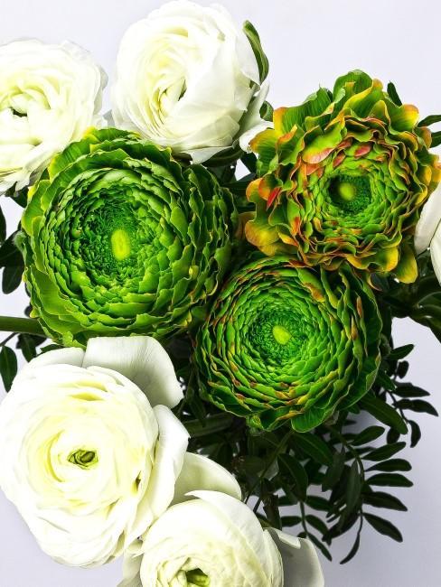 Strauß mit weißen und grünen Ranunkeln