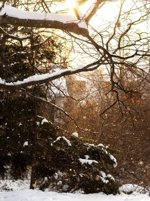 Garten winterfest machen im Herbst