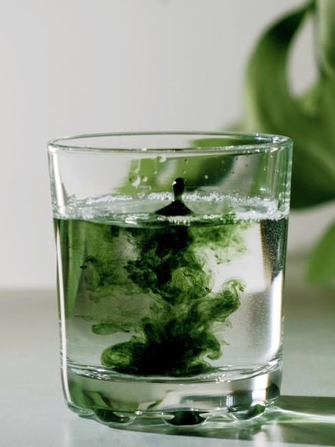 Chlorophyll Wasser trinken als TikTok Trend