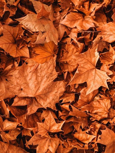 Herbstliches Laub im Garten