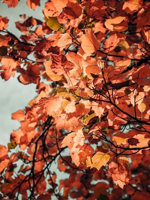 Bunte Blätter an den Bäumen