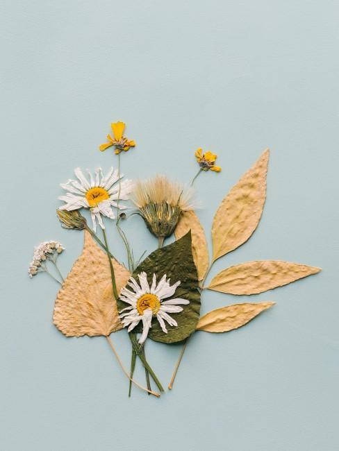 gepresste weiße Blumen und andere Trockenblume und Blätter