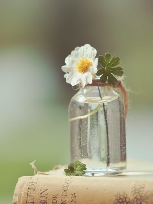 weißes Blümchen in kleinem Glas-Fläschchen
