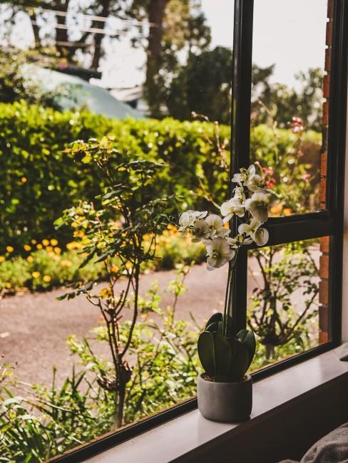 weiße Orchidee auf dem Fensterbrett