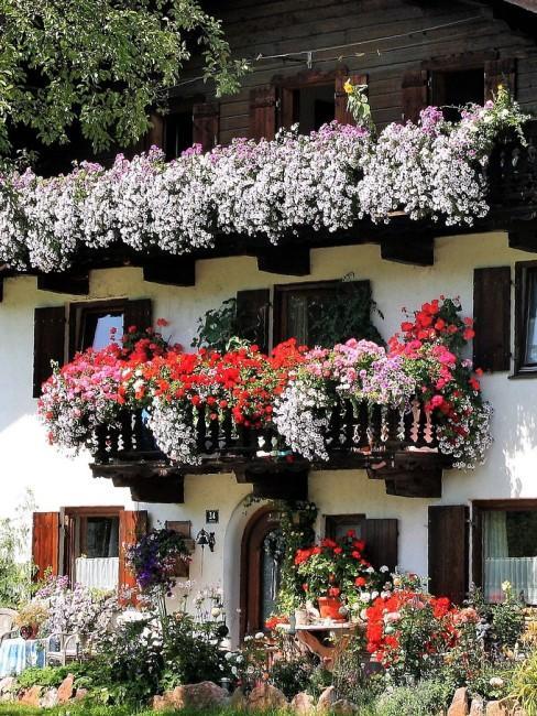 Weiße Blumen am Balkon