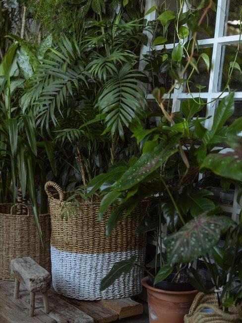 Pflanzen für den warmen oder kalten Wintergarten