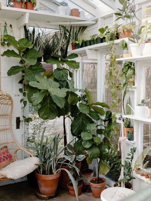 Wintergarten schön einrichten mit vielen Pflanzen