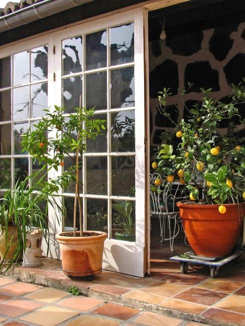 Mediterrane Pflanzen fürs Wintergarten einrichten