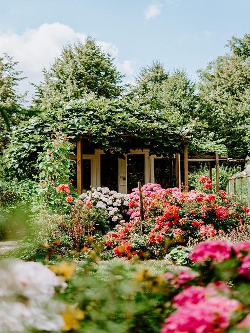 Garten mit vielen Beetpflanzen