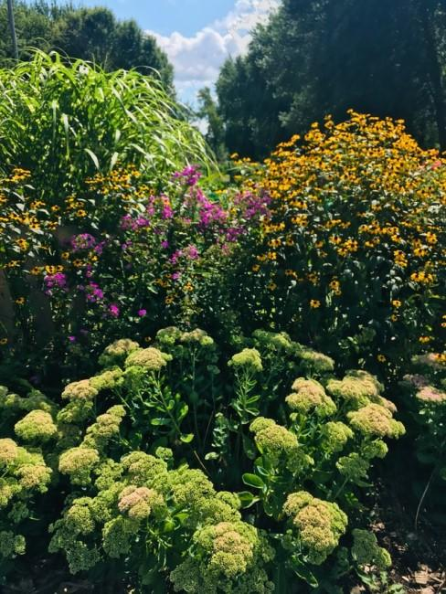 Wuchshöhe beachten beim Blumenbeet anlegen