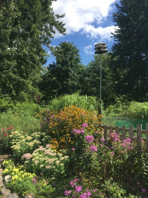 Blumenbeet im naturnahen Garten