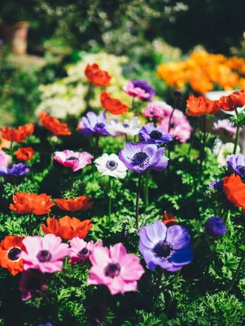 Ideen für bunte Blumenbeete