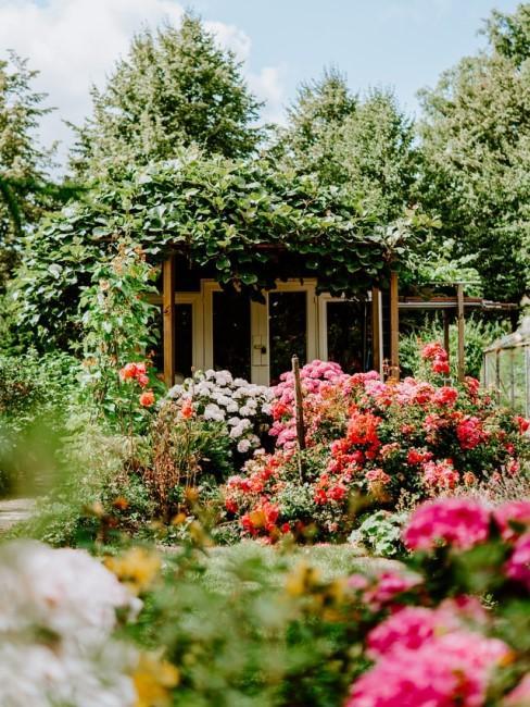 Viele bunte Blumen im Blumenbeet