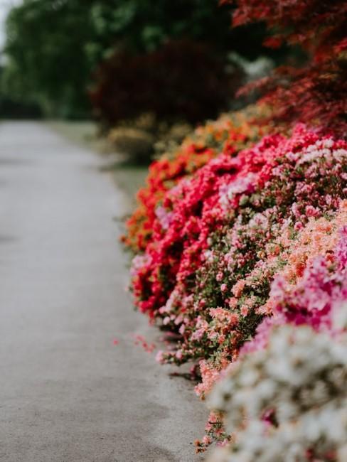 Blumenbeet Ideen für kleine und große Beete