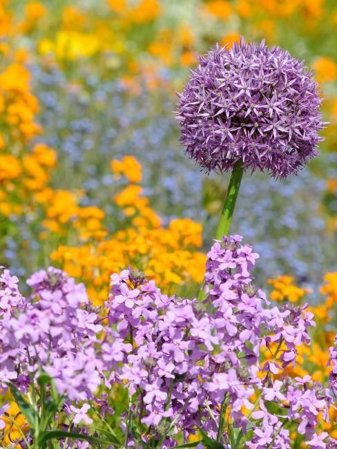 Lila und gelbe Blumen