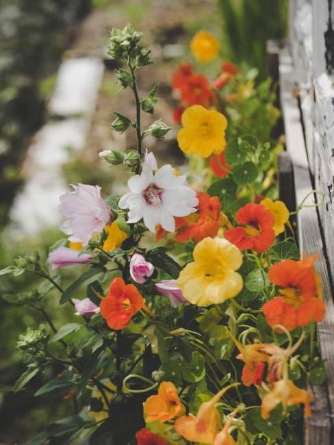 Blumenbeet Ideen für schmale Beete
