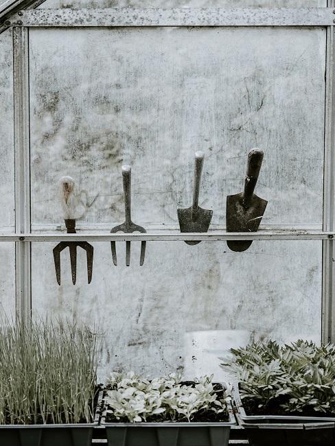 Gartenwerkzeuge in einem Gewächshaus