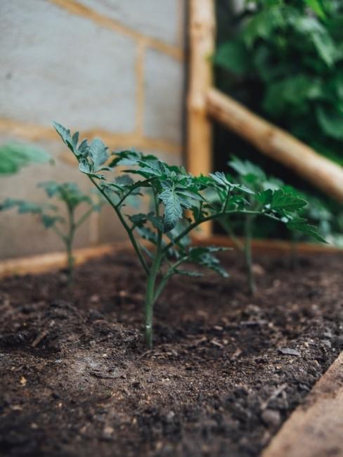 Gemüse angebaut