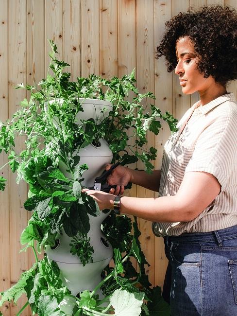 Frau pflegt Kräuter eines Pflanzturms