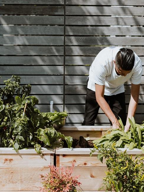 Mann bepflanzt ein Hochbeet