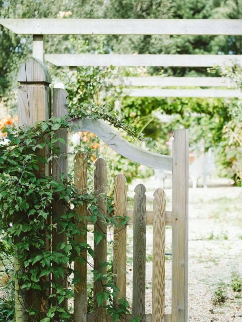 Efeu an Holzzaun im Garten