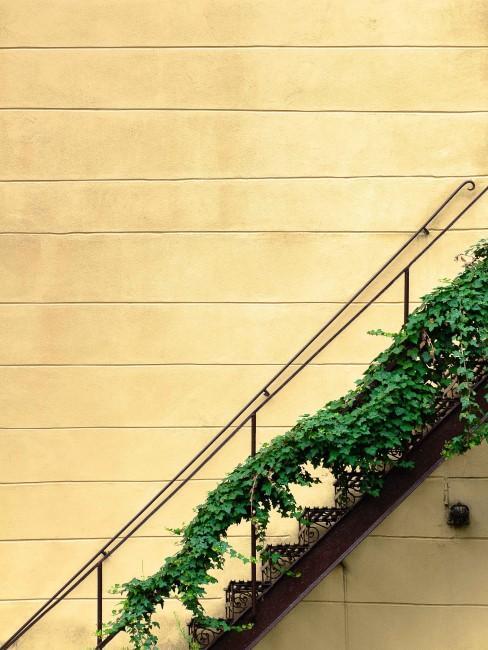 grüner Efeu rankt an Treppengeländer