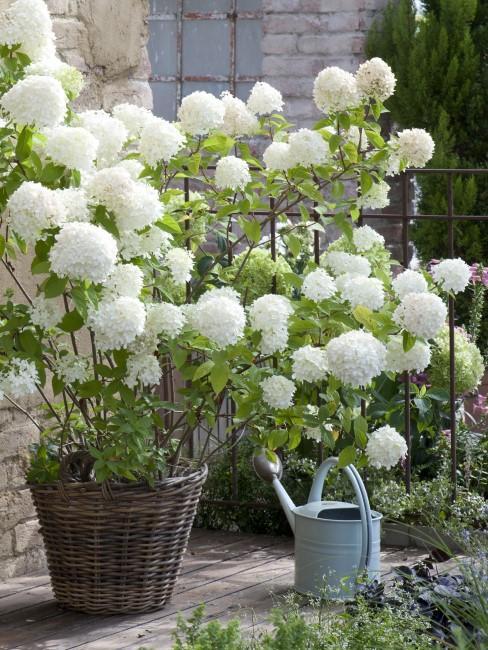 Weiße Blumen für Garten und Terrasse