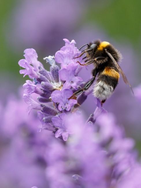 Bienenfreundliche Gartenbepflanzung