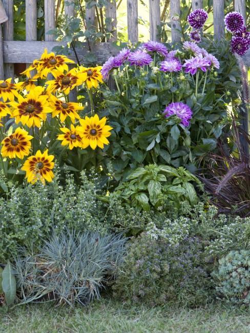 Bunte Blumen und Kräuter im Garten