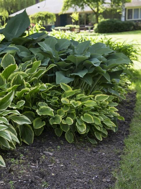 Grüne Gartenbepflanzung