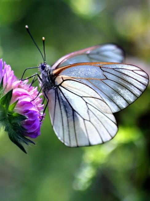 Insektenfreundliche Gartenbepflanzung