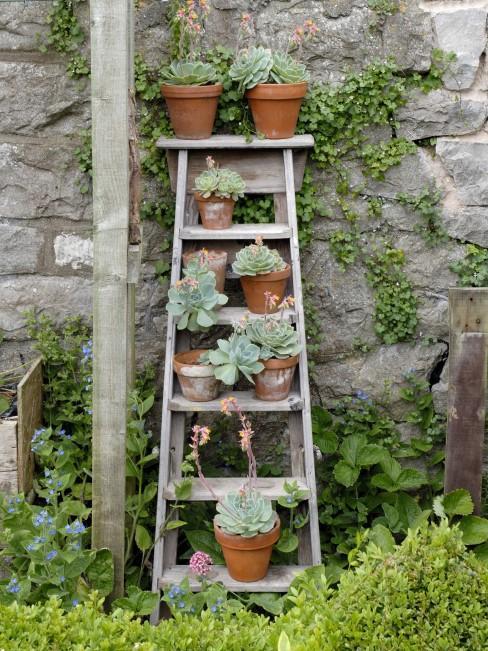 Leiter als Pflanzenregal