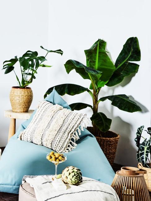 Bananenpflanze mit Sitzkissen in Sitzecke