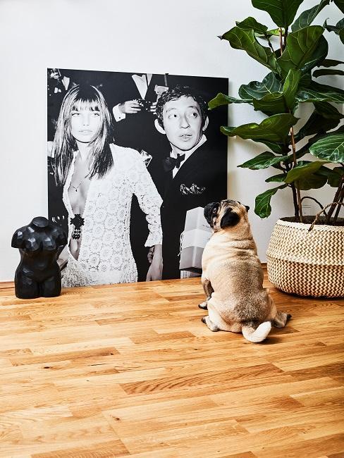 Hund schaut auf schwarz weiß Bild am Boden
