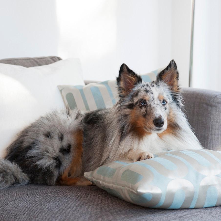 Großer Hund liegt auf grauer Couch