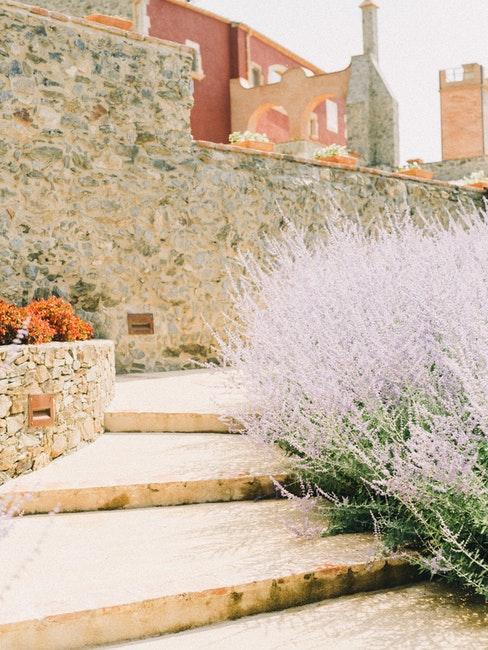 Schöner mediterraner Steingarten mit Mauer
