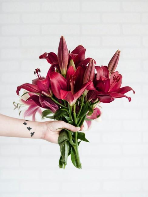 Strauß rote Lilien als Geschenk