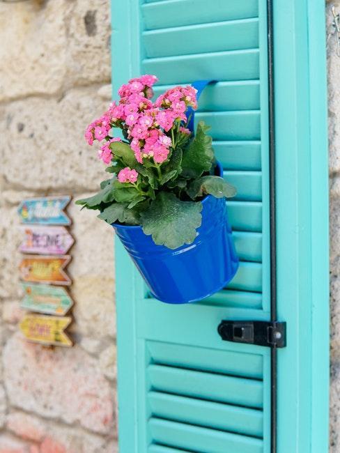 Geranie in einem blauen Topf an einem hellblauen Fensterladen