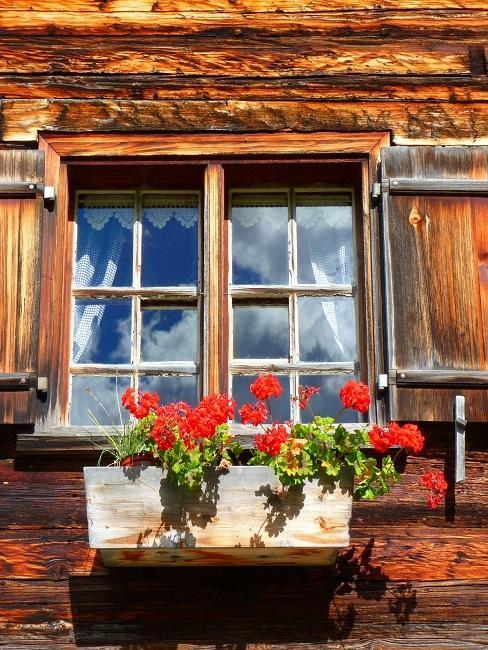 Geranien in einem Kasten vor dem Fenster eines Holzhauses