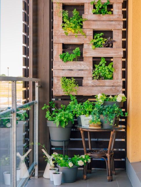 Vertikaler Garten aus Paletten auf dem Balkon