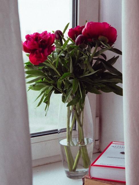 rote Pfingstrosen in Glasvase auf dem Fensterbrett