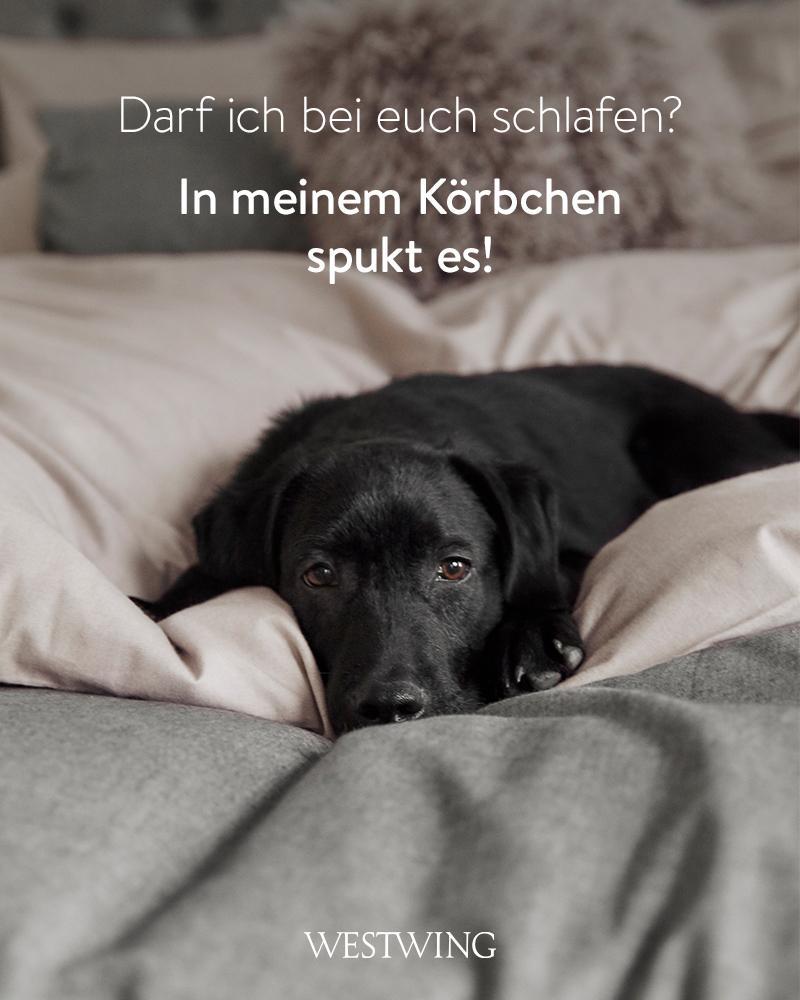 Bild mit schwarzem Hund im Bett und Hundespruch Körbchen