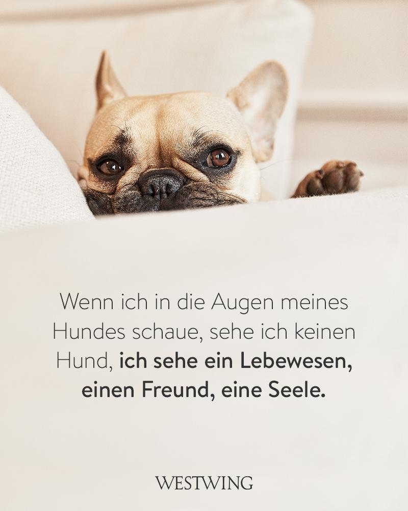 Bild mit Hund auf Couch und Hundespruch Lebewesen