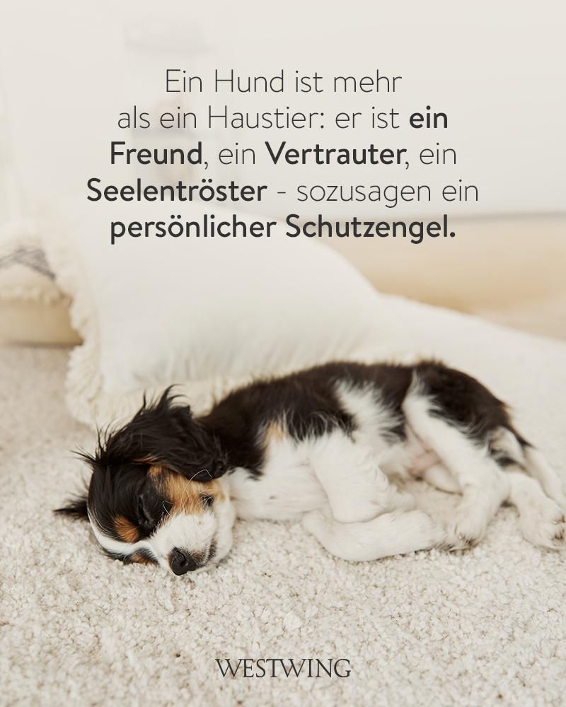 Bild mit liegendem Hund und Hundespruch Seelenverwandter