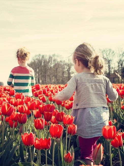 rote Tulpen Feld mit Kindern