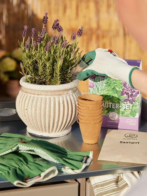 Lavendel neben verschiedenen Pflanzutensilien