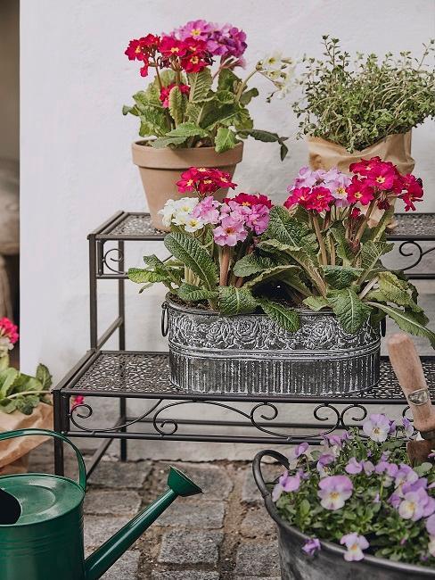 Balkonregal mit verschiedenen Blumen