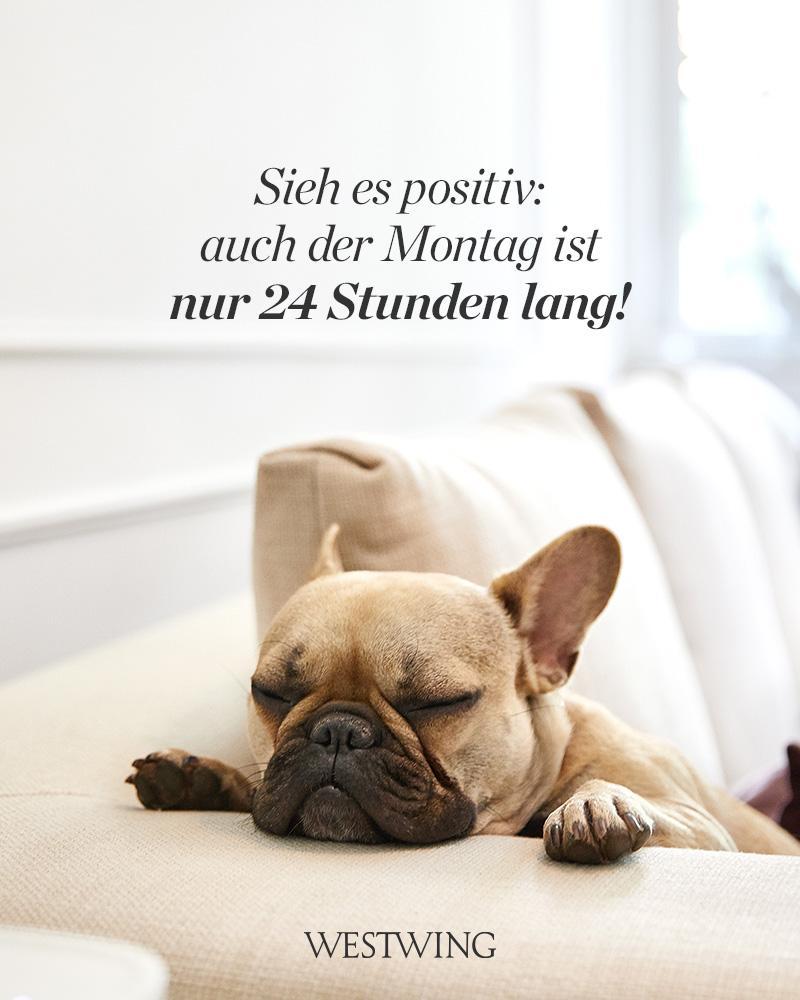 Bild mit Hund und Montag Gruß