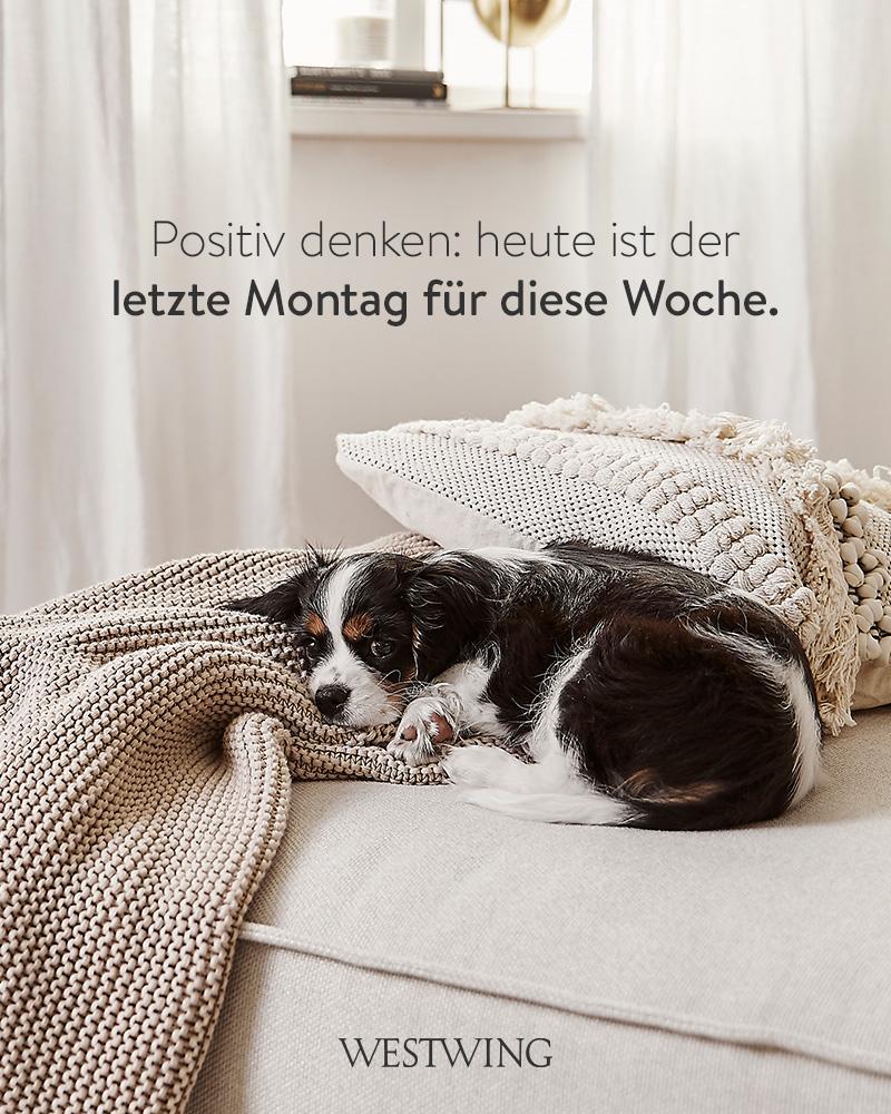 Bild mit Hund und lustiger Montagsgruß