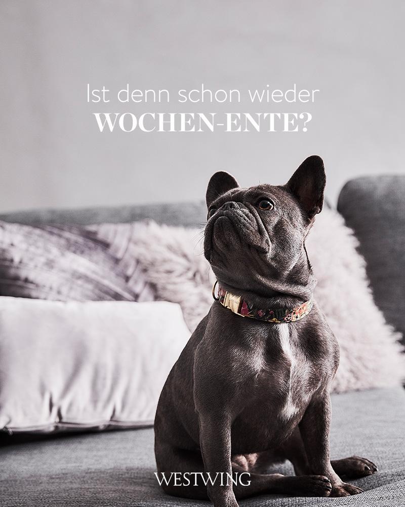 Bild mit Hund und Wochenendspruch